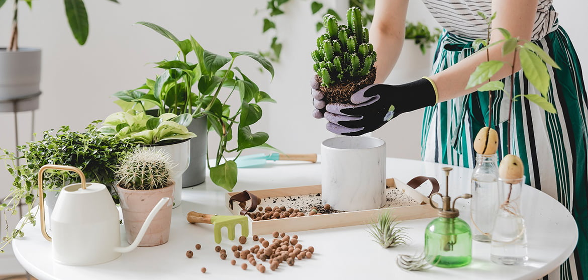 Woman gardeners  transplanting plant in ceramic pots on the whit